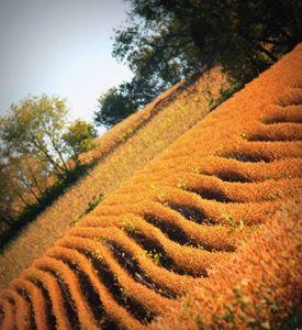 Fall Soy Fields