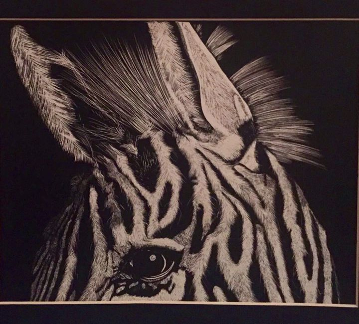One Eyed Zebra - Punnet's scratchboard