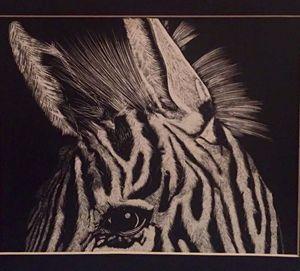 One Eyed Zebra