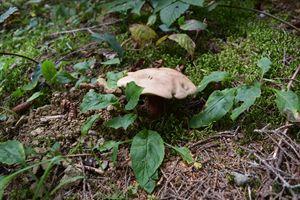 Mushroom the Little Umbrella