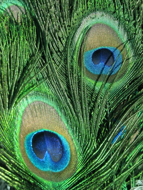 Feathered - M.R.Art