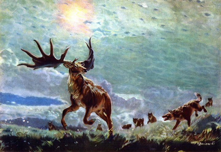 Giant elk - SPCHQ