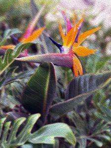 Bird of Paradise - Aumara SpiritArt
