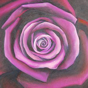 Purple and pink beautiful Rose
