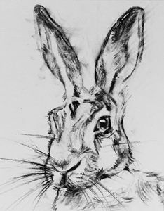 Charcoal Hare