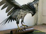 Peregrine falcon in steel