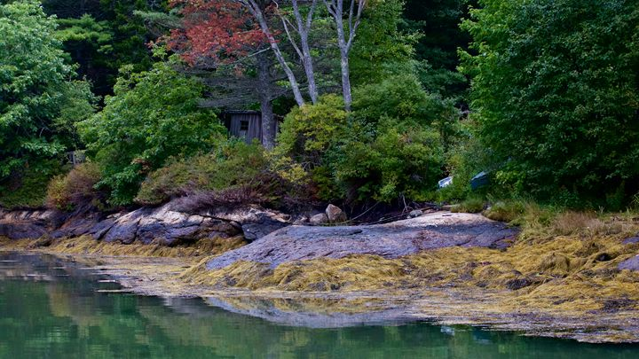 Fall Along the Shore - Cantor Photography