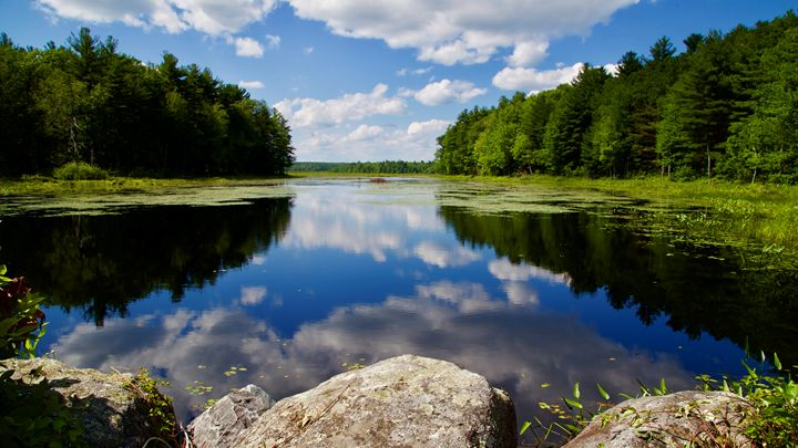 Reflections in Summer - Cantor Photography