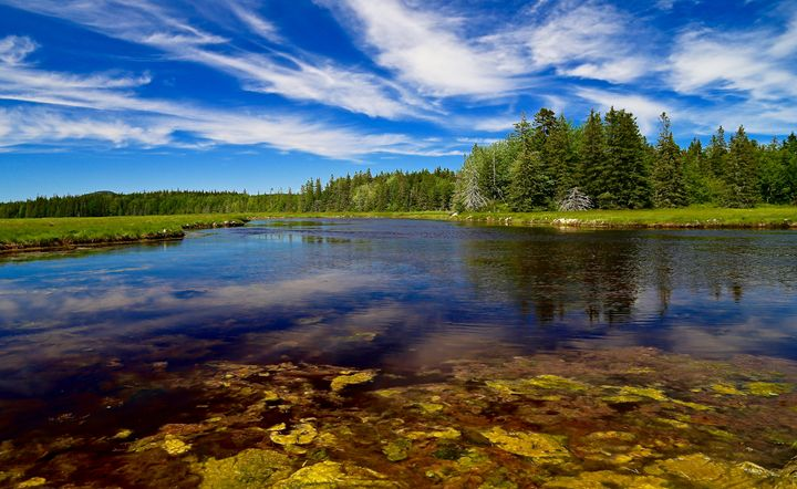 Acadia - Pond and Meadow - Cantor Photography