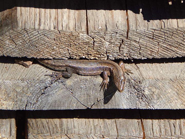 Lizard - StrawBerry