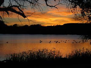 Sunset at Scott Lake - Ducks on Lake