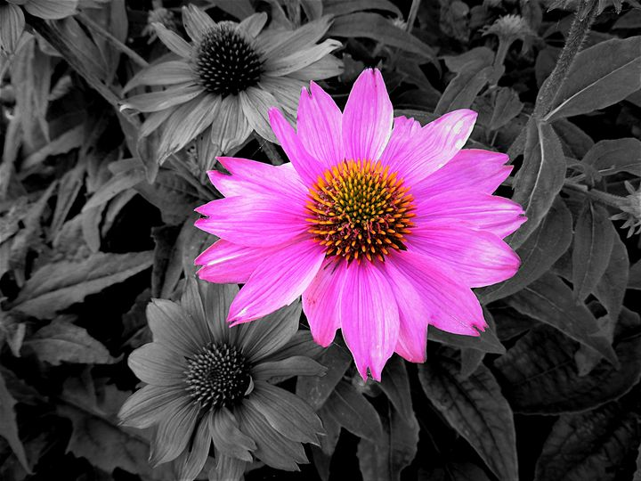 The Stand-Out Daisy - Yolanda Caporn Art