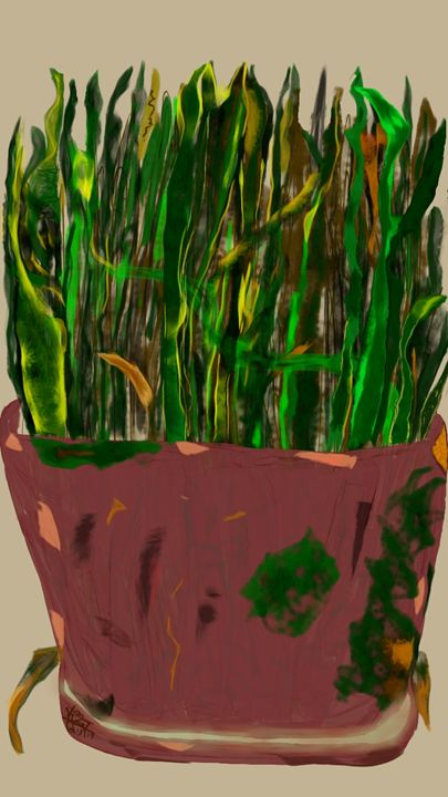 Snake Plant in Terra Cotta Pot - Soul Food 4 The Soul Gallery
