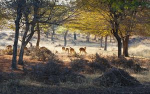 Deers grazing in the sunrise