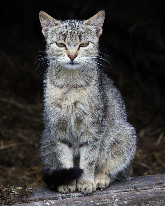 Evil Cat II - Jaroslaw Szadkowski