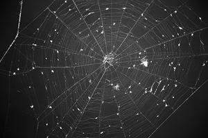 Night Sky Net