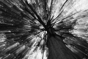 Gleam Tree