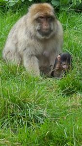 Mum and baby