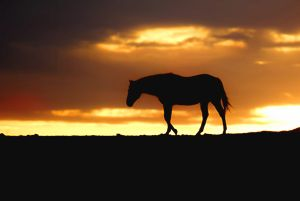 Horse at Sunrise