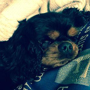 Sleeping dog - Katie lauton