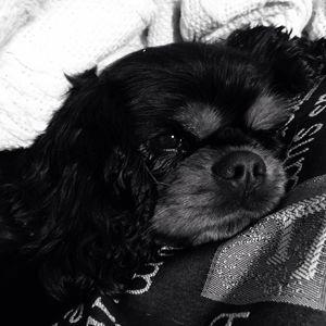 Black+white sleepy dog - Katie lauton