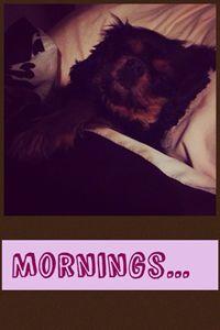 Mornings... - Katie lauton