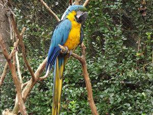 A Parrot's View