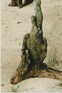 Cypress Fingers