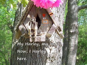 My Harley, my love.