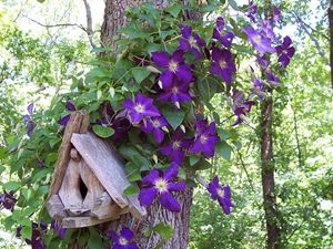 Birdhouse With Clematis