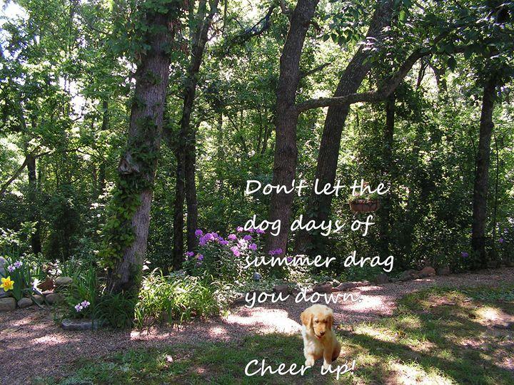 Dog Days Of Summer - Starlight