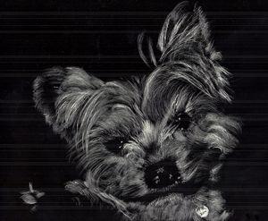 Little Westie