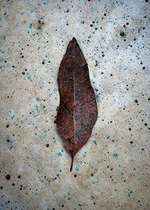 gum leaf on stone 1