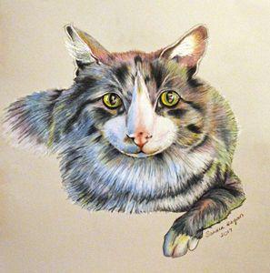 A Cat Named Thor - Sandra Hagan
