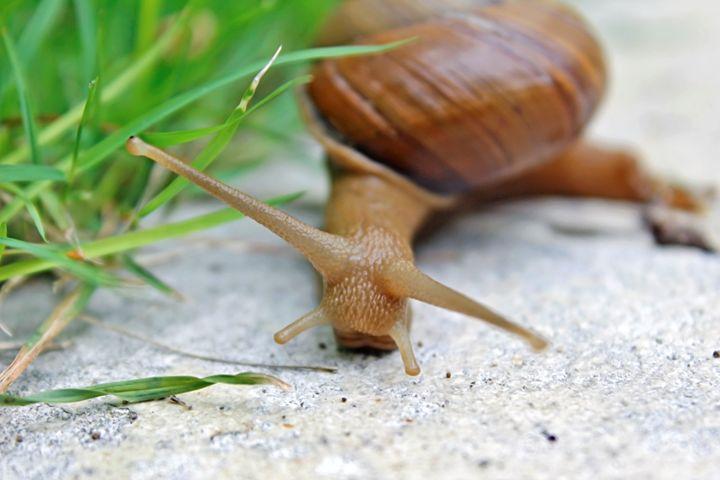 Snail - Nick Melesko Photography