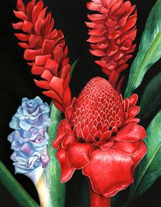 Torch Ginger -Watercolor - Michele Aguilar