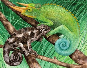Jackson Chameleons -Watercolor