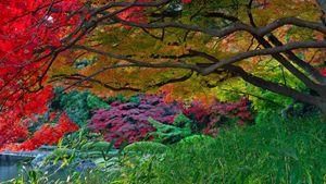 Autumn Park Lake Trees Bridge Garden