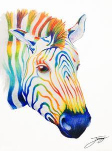 The Rainbow Zebra