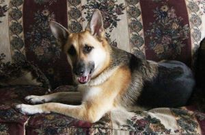 Tara The Diva Dog - Klacey's Photography & Gifts