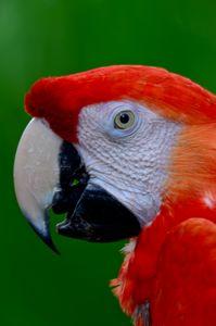 Pretty Bird - Mike Babic Photography