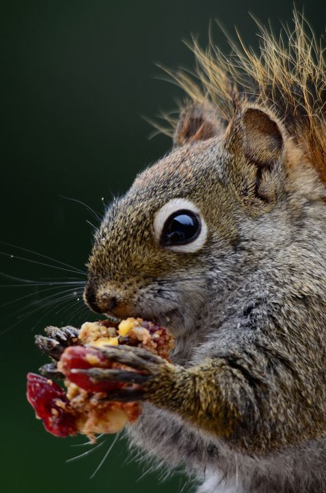Squirell - Mike Babic Photography