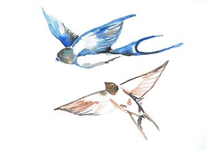 Swallows - C.Hill Fine Art