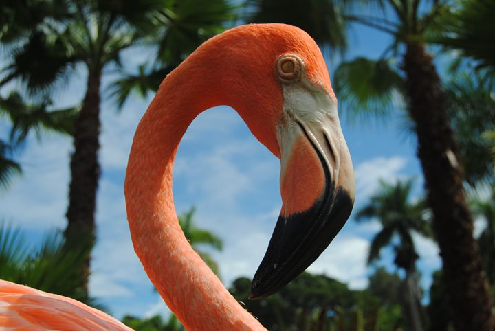 flamingo 3 - Octopusiscool