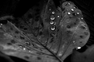 dew drops on leaf