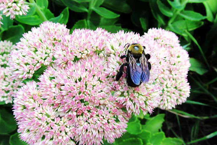 Busy bee - Mandi May photography