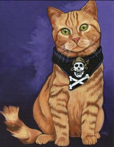 Skully The Pirate Cat