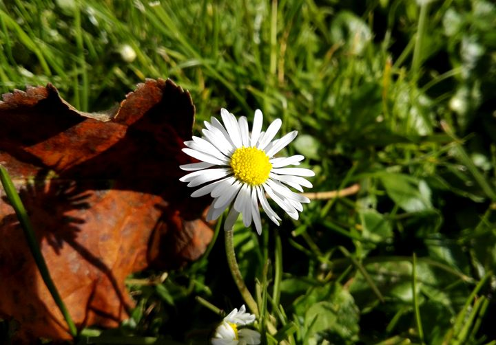 white flower - Jana ART