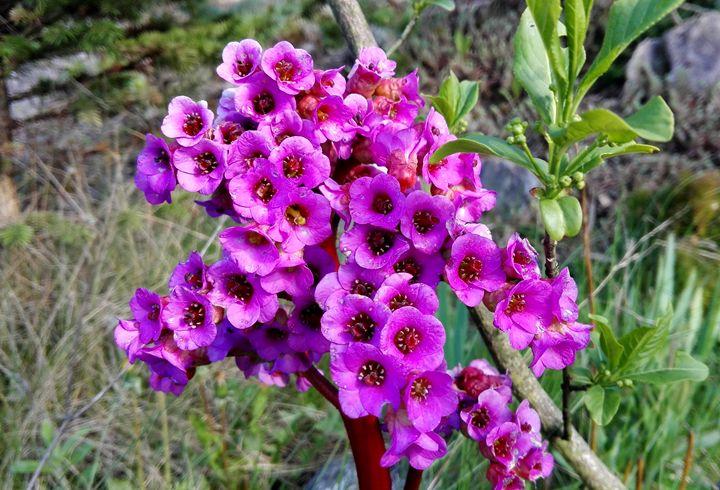 purple flowers 1 - Jana ART