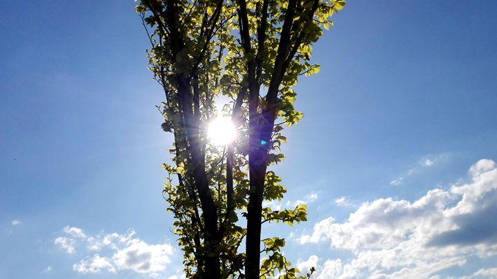 sunshine - Jana ART